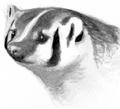 Badger.FG-1