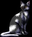 White Tail.warrior