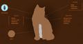 Hawkfrost.Website