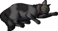 Fang.kittypet