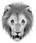 Lion.FG-1