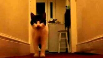 The_cat_with_an_english_accent