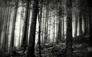 Black and white nature.jpg
