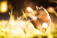 Cat-sunlight-heated-pet-bed