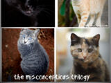 The Misconception Trilogy