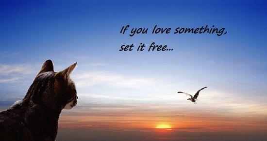 Set It Free.jpg