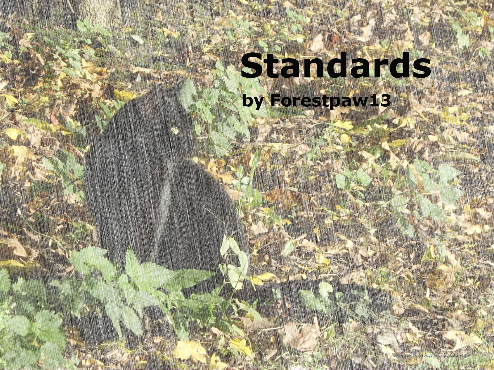 Standards (Series)
