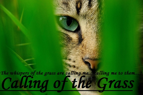 Calling of the Grass