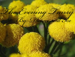 The Evening Tansy