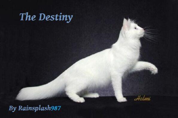The Destiny.jpg