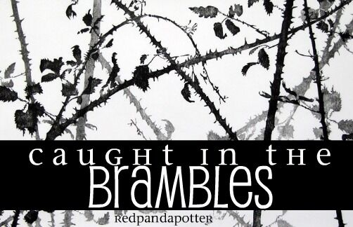 Caught in the Brambles.jpg