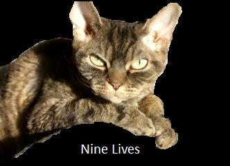 Nine lives cover.png