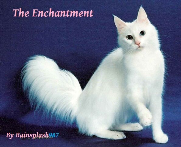 The Enchantment.jpg