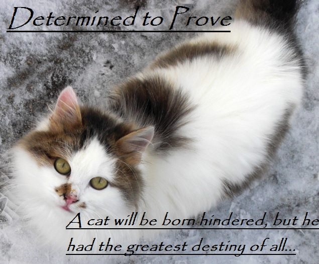 Determined to Prove