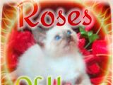 Roses of Hope