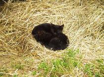 Sleeping kittens.jpg