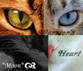 Warrior Cats by Moon Forever