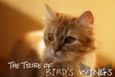 Tribeofbirdswings.jpg