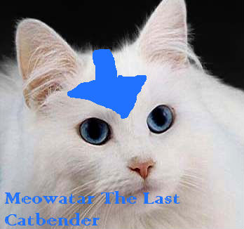 Meowatar: The Last Catbender