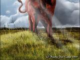 Forest Bull