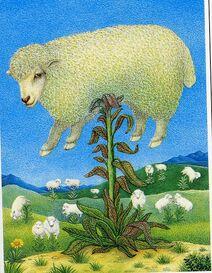 Agneau plante borametz bartometz barmotez barbary lamb tree vegetable-1-.JPG