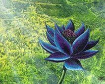 Black+Lotus.JPG