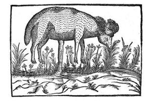 Lamb tree -2-.jpg
