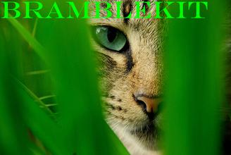 Bramblekit.png