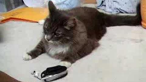Toby Meowing to Cat Cellphone Ringtone