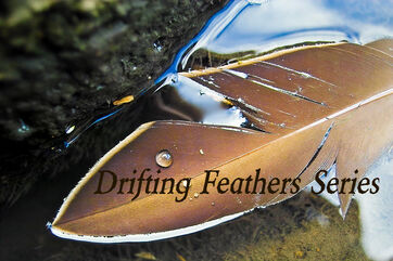 Drifting Feathers Series Pic.jpg