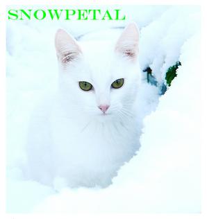 Snowpetal.png