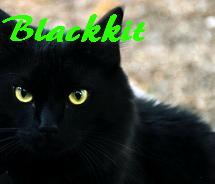 Blackkit.png