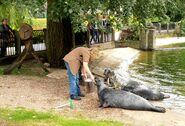 Ogród Zoologiczny karmienie