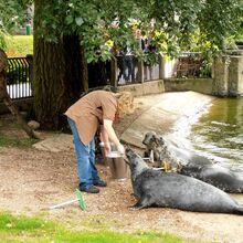 Ogród Zoologiczny karmienie.JPG