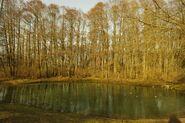 Park Olszyna – stawek