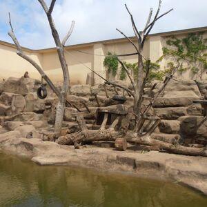 Ogród Zoologiczny (wybieg dla małp).JPG
