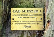 Tabliczka Dąb Mieszko ul. Nowoursynowska