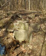 Lasek na Kole (ruiny 6)