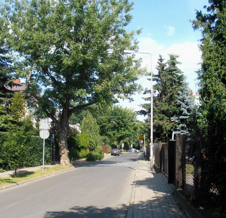 Ulica Znicza