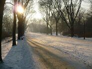 Park Skaryszewski zima aleja