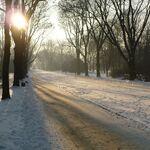 Park Skaryszewski zima aleja.JPG
