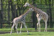 IMG 6883 cr Warszawa Zoo