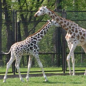 IMG 6883 cr Warszawa Zoo.jpg