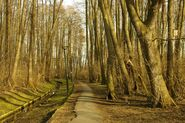 Park Olszyna – ścieżka przez ols
