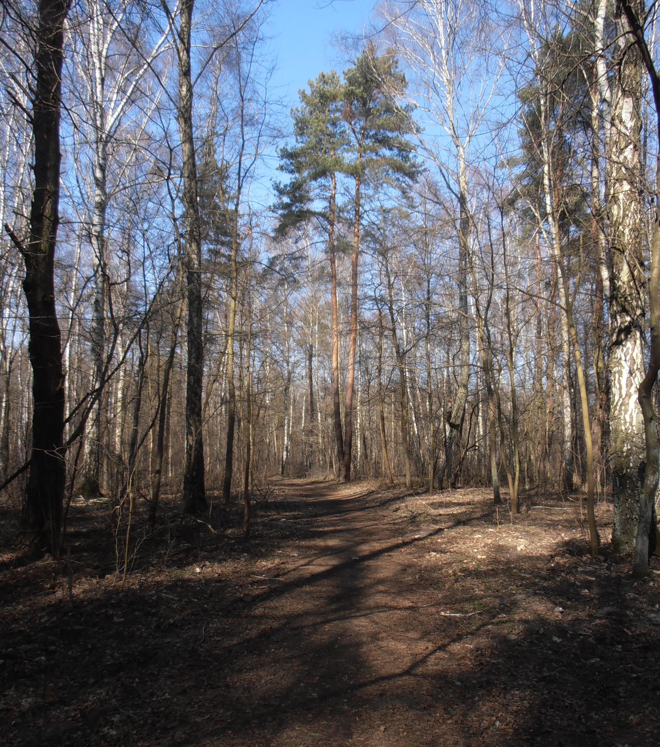 Park Leśny Bemowo