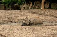 Ogród Zoologiczny (nosorożec)