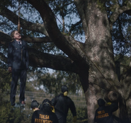 Judd Crawford hanging from a tree in daylight