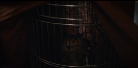 Laurie Blake's Pet Owl named Who