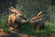 0 Hazel-voiced-by-James-McAvoy-and-Fiver-voiced-by-Nicholas-Hoult-at-Watership-Down