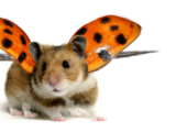Ladybird Hamsters